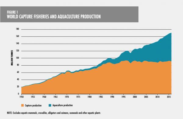 Pesca commerciale e produzione di pesce
